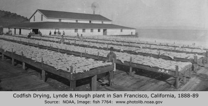Codfish drying, Lynde & Hough, San Francisco, 1888-89