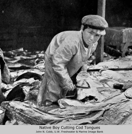 Native boy cutting cod tongues, John Cobb photo, 1916