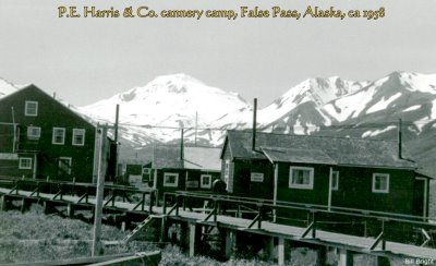 P.E. Harris cannery camp, False Pass, Alaska, 1955