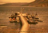 P.E. Harris cannery fuel dock, False Pass, Alaska, 1963