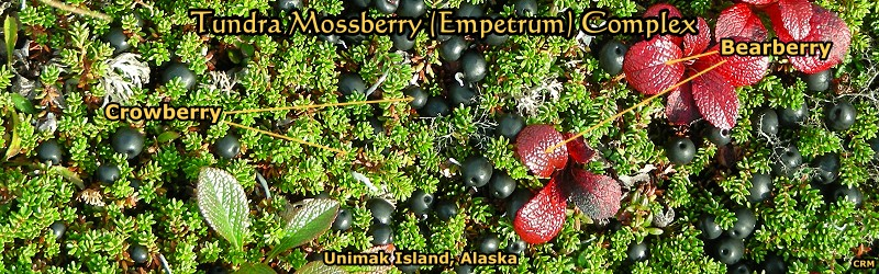 Plants of the Unimak Area, Alaska